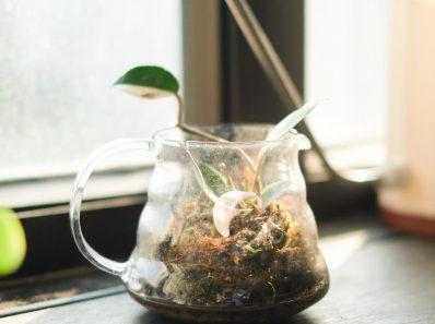 盆栽種植 與 咖啡「植啡空間」- 光合作舍9